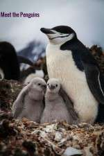 Watch Meet the Penguins M4ufree